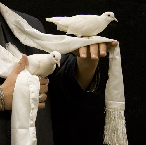 Dove from Scarf, Double  - White