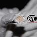 BTC Parlor Rope over 325 ft. (Extra White) (BTC2) - Tour
