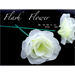 White Flash Flower (2pk.) - by GD Wu & GT magicstore - Trick